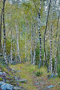 Swiss-Birch-Forest-sm